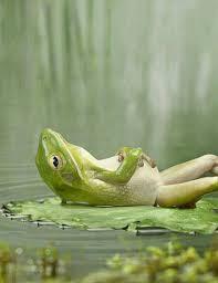 grenouille-detente
